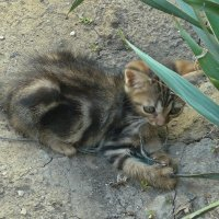 Котёнок :: Вера Щукина