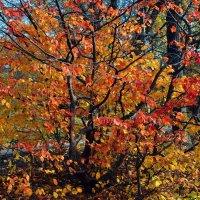 Осенний наряд :: Владимир Бровко