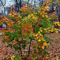Осенняя палитра :: Владимир Бровко
