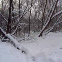 Зима в Измайловском парке :: Андрей Лукьянов