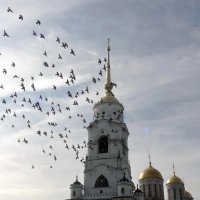 Сизый голубь - 2 :: Peripatetik