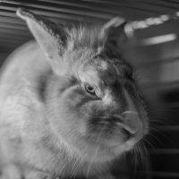 кролики злы :: Анна Мальм