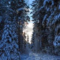 Зимний лес :: Александр Романов