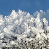 Ледяные фантазии :: Swetlana V
