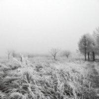 Туманное утро :: Станислав Любимов