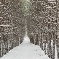 Лесные стражи :: Сергей Корнев