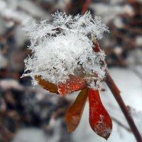 Снежные кристаллики. :: Наталья