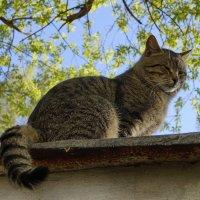 кот на крыше :: Ирина ***