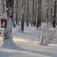 Мороз и солнце :: Иван Торопов