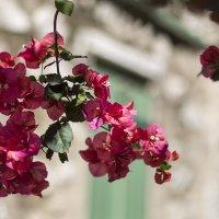лето на Средиземном море :: Юлия Ходаковская