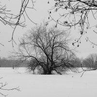 Монохромная  зима. :: Vlad Borschev