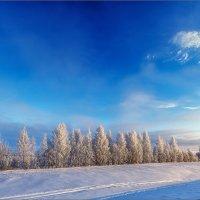 Картинка морозная... :: Александр Никитинский