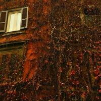 Оранжевый Зима :: Дмитрий Близнюченко