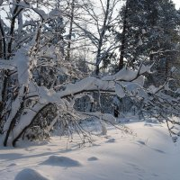 В лесу :: Андрей Зайцев