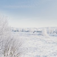 зима :: Алексей Жариков