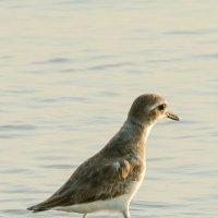 Синдбад-мореход :: Виктор Куприянов