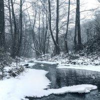 Зимний лес :: Сергей Форос