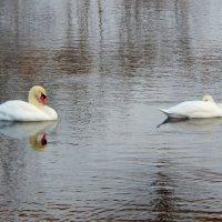 на реке :: linnud