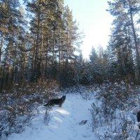 Зимняя прогулка с собакой :: Елена Фалилеева-Диомидова