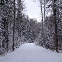 Дорога через лес :: Светлана