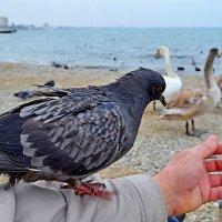 Птицы зимой :: Виктор Шандыбин