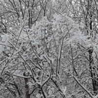 Узор из зимних ветвей :: Aнна Зарубина