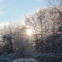 Зимний лес :: Мари ^_^ !
