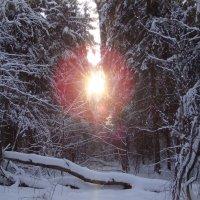 Зимний пейзаж. :: Antonina
