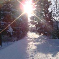 Зима. :: Antonina