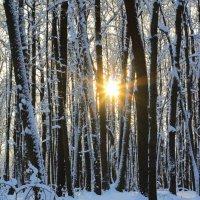 Зимний вечер в лесу! :: Наташа Шамаева