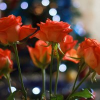 Розы :: Aleksandr Aleksandrov