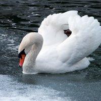 Плыву во льдах,как ледокол! :: Наталья