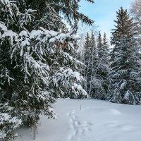 В зимнем лесу. :: Александр Рейтер