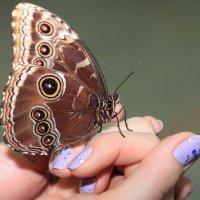 вдохновение от природы... :: Ирина