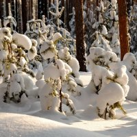 Зимний этюд :: Валерий Толмачев