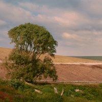 Последнее дерево :: Ron Леви
