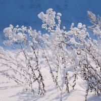 Снежно и морозно :: Angelika Faustova