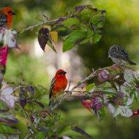 О чём щебечут птицы :: Марина Мудрова