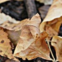 Осень :: Камила Галимова
