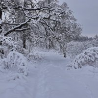 Снежно. :: Валера39 Василевский.