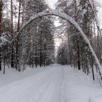 Ворота в лес :: Михаил