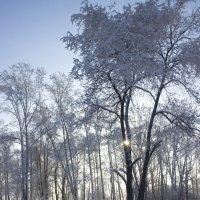 Зимнее солнце :: JulO Юлия