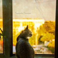Вечерние посиделки :: Виктория Воробьева (Wish)