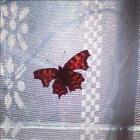 Деревенская бабочка :: Софья