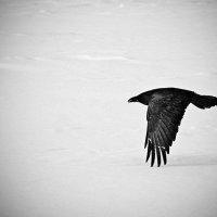 """...пролетая... (""""Черный ворон""""..) :: Александр Герасенков"""