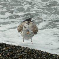 Морская чайка :: Вера Щукина