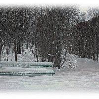 Печален зимний парк.... :: Tatiana Markova