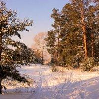 Лес мирно спит... :: И.В.К. ))