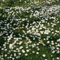 Из зимы в лето. Цветочная поляна в Белграде. :: Виктор М
