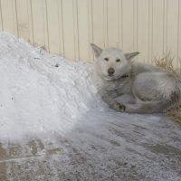 Уличный пес :: Елена Фалилеева-Диомидова
